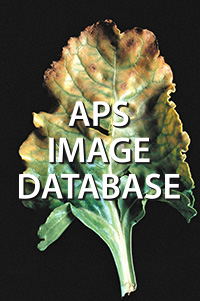 *APS Image Database (Individual use)