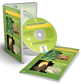 Diseases and Pests of Sugarbeet Volume 1 DVD: Cercospora / Ramularia, Beet Cyst Nematode