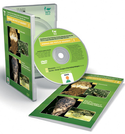 Diseases and Pests of Sugarbeet Volume 2 DVD: Rhizomania, Root-Rotting Pathogens
