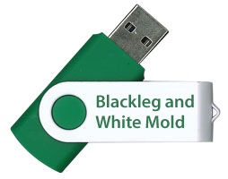 Blackleg and White Mold - Two Major Fungal Diseases of Oilseed Rape FLASH DRIVE